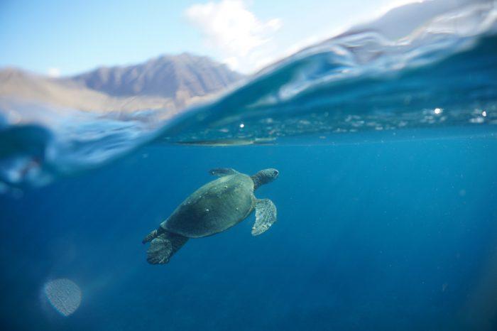 iruka-turtle