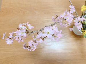 avocado-dye-cherry-blossoms